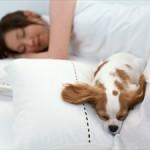 いびきの原因や防止・改善・解消法。枕などのグッズもご紹介します。