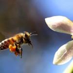 ビーポーレンは花粉症にも効く?その効果や副作用、食べ方を説明します!