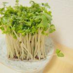 ブロッコリースプラウトのスルフォラファンに注目!その効果やレシピをご紹介。
