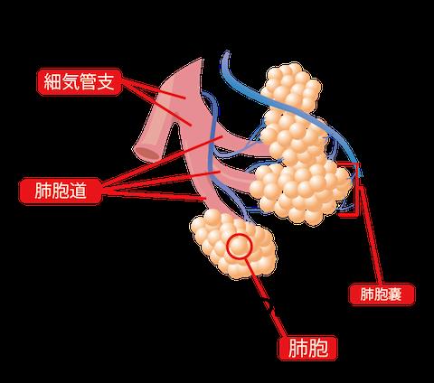 間質性肺炎とは?治療や原因、症状、予防法など | 体の不調の ...