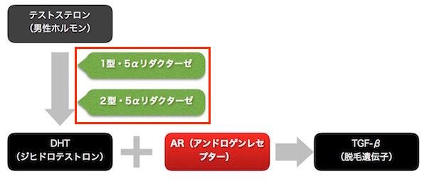 saga-ro5