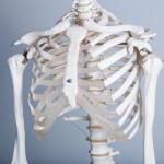 胃下垂は治る?原因と治し方を詳しく解説します。